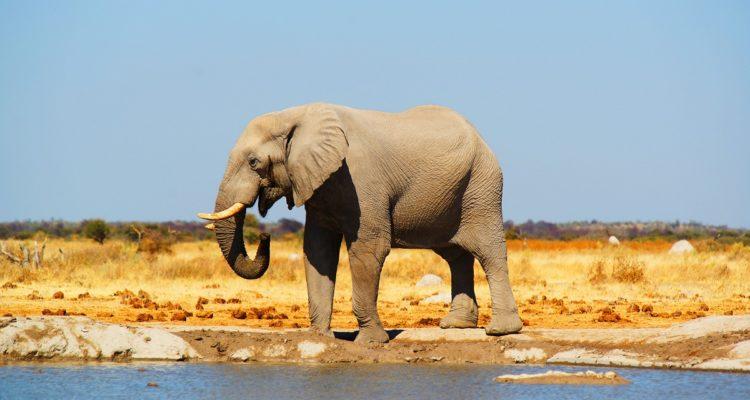 Botswana Piękno Natury